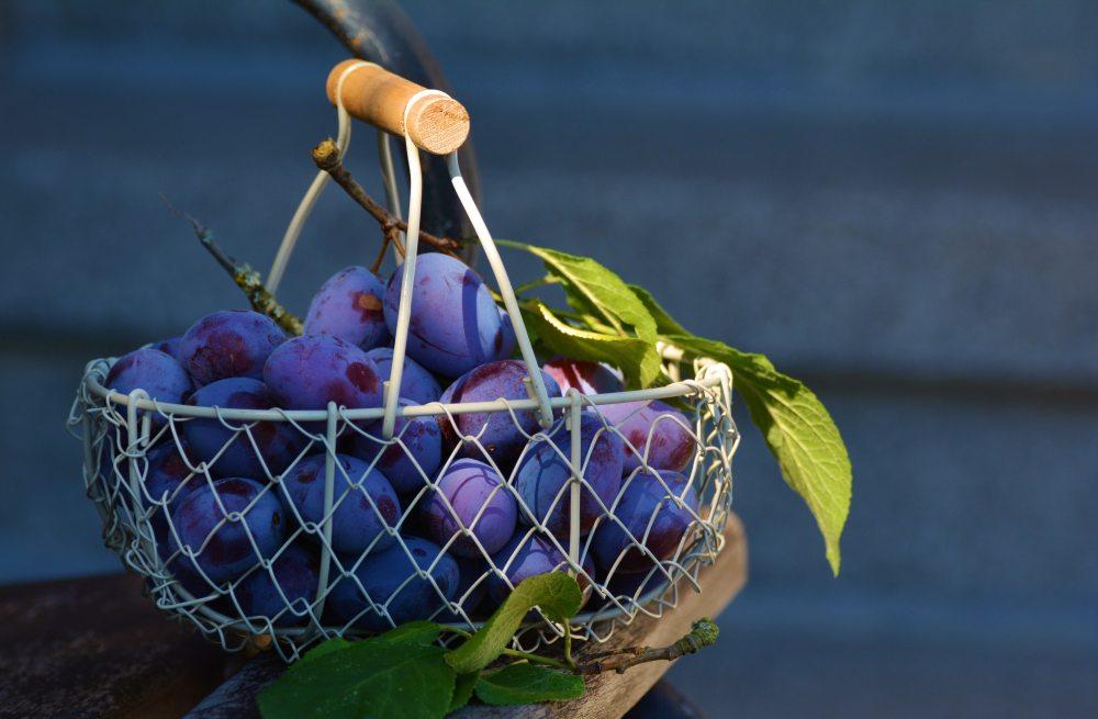 basket-blurry-close-up-169579