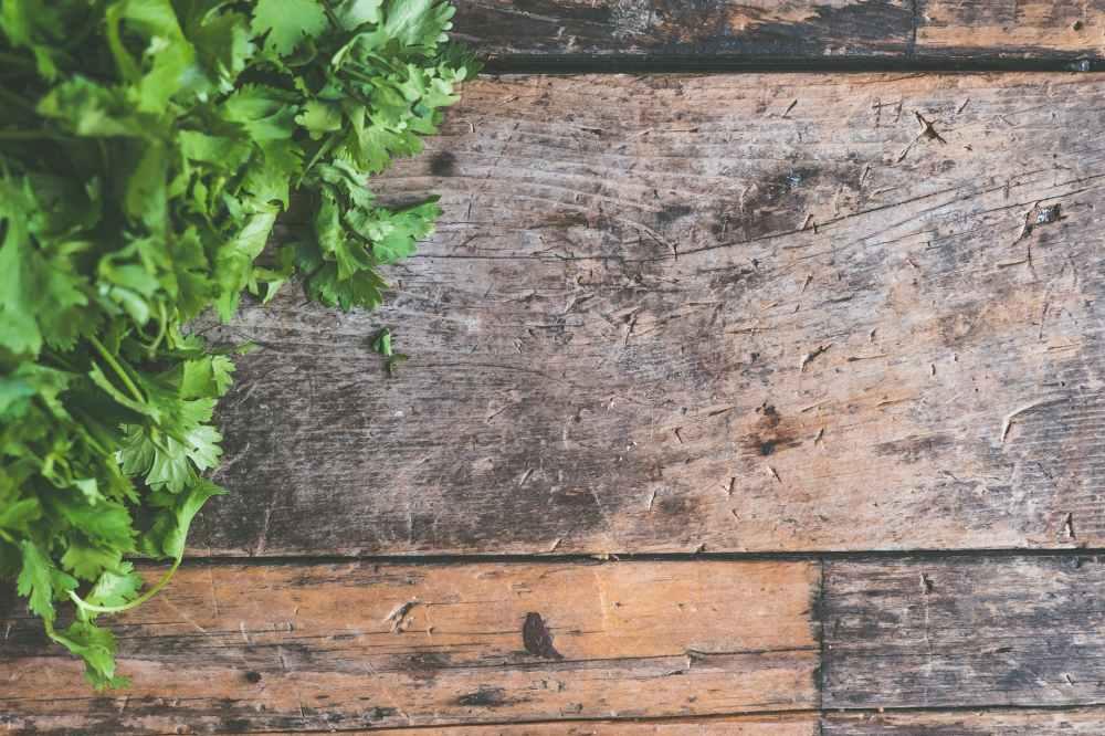 cilantro green hardwood healthy